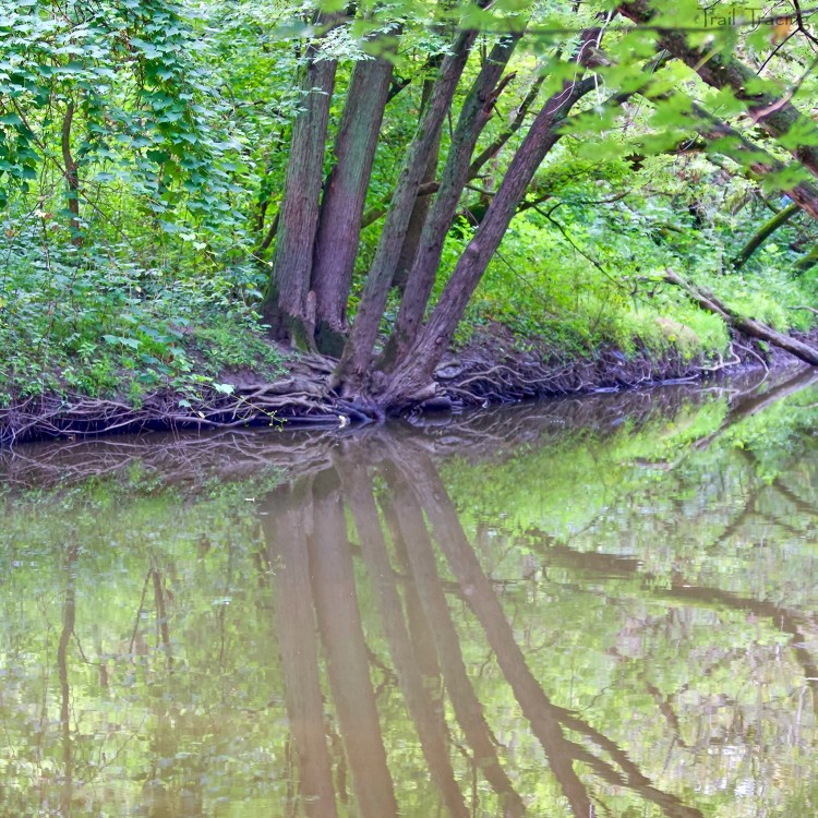 LaBagh Woods Trees Reflecting 1