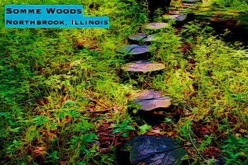 Somme Woods Thumbnail