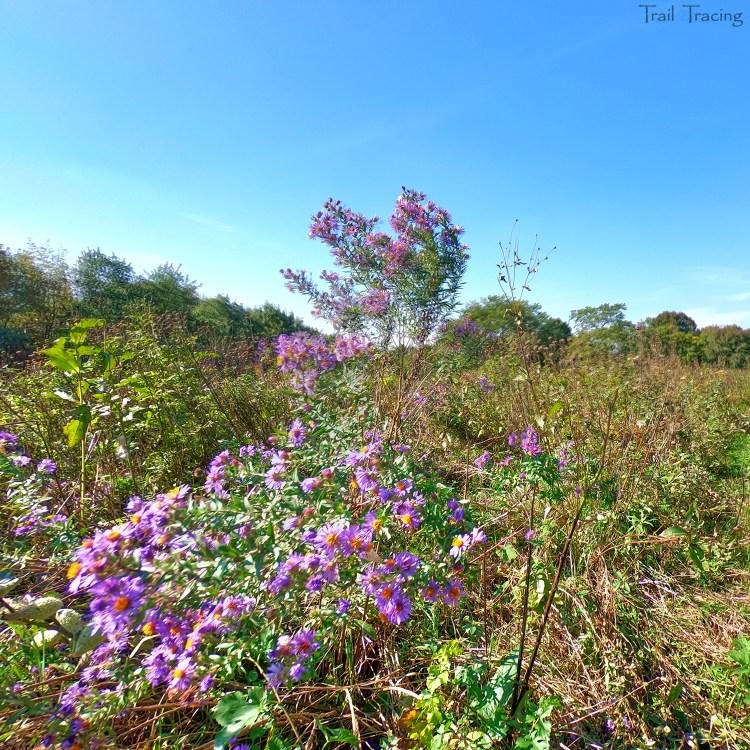 Montrose Point Bird Sanctuary 3