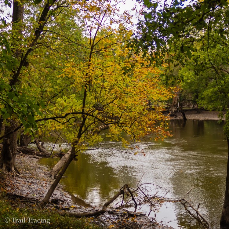 Robinson Woods Yellow Tree
