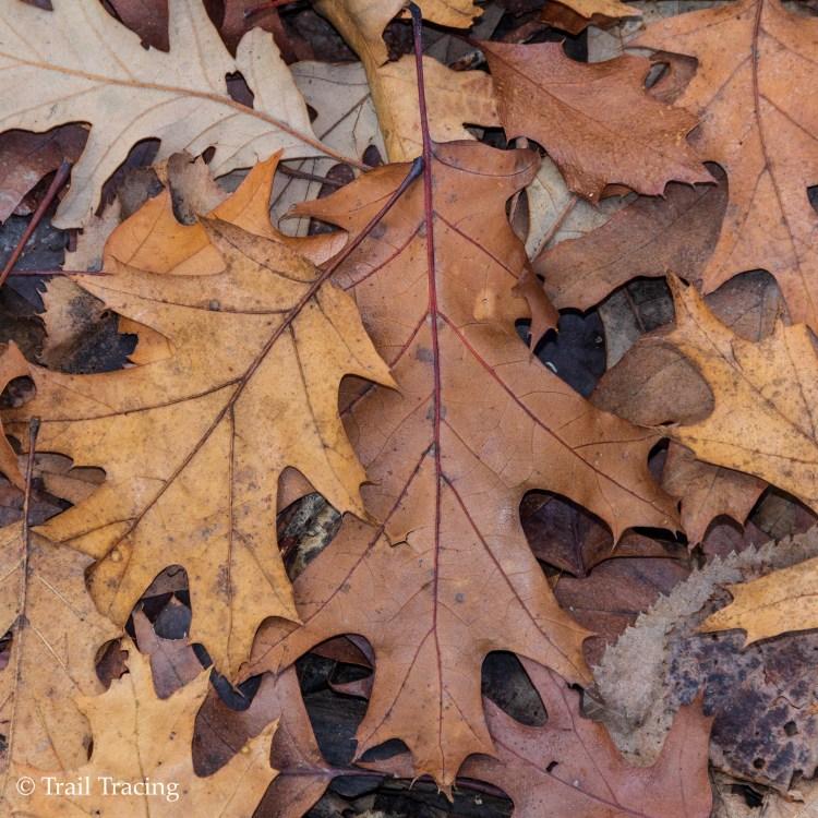 LaBagh Leaves