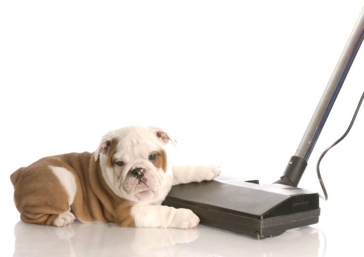 Dog Training App, TrainAway Dog App for noise exposure training.