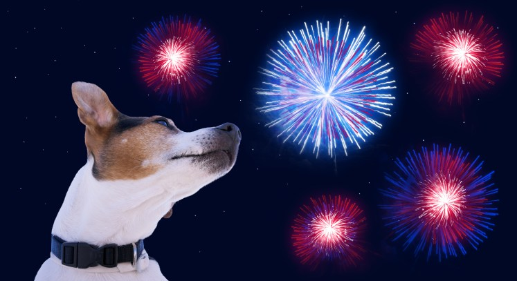 Calming dogs during Fireworks, 4th of July tips for dogs.