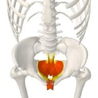 骨盤底筋群,女性,産後,尿もれ,予防