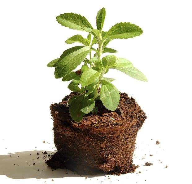 is stevia safe for you
