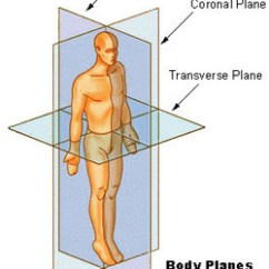 Mouse Skeletal Diagram 6 Pin Ac Cdi Wiring Anatomical Terminology   Seer Training