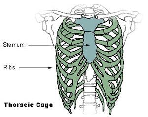 anatomy skull diagram top cucv wiring axial skeleton (80 bones)   seer training