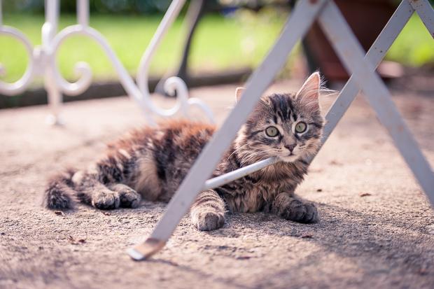 Katze Speedy 1