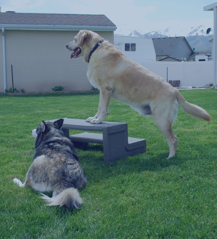 dog-standing