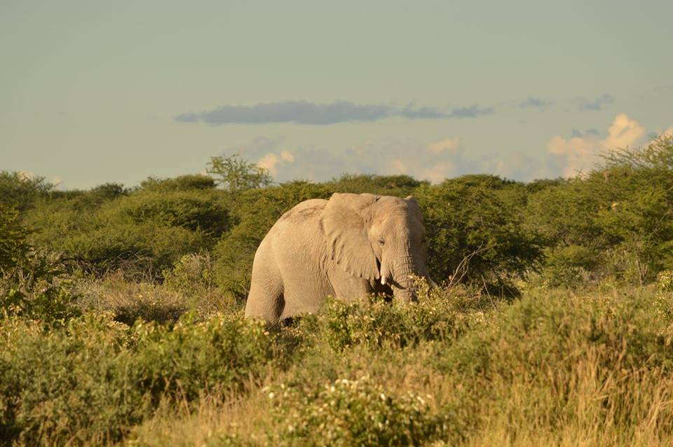 Safaris are expensive, but you'd be hard-pressed to find someone who regrets shelling out for one