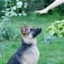 5 Actionable German Shepherd Training Tips You Can Start Today
