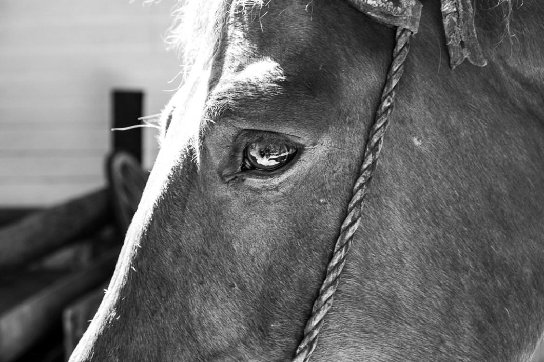 bariloche cheval argentine