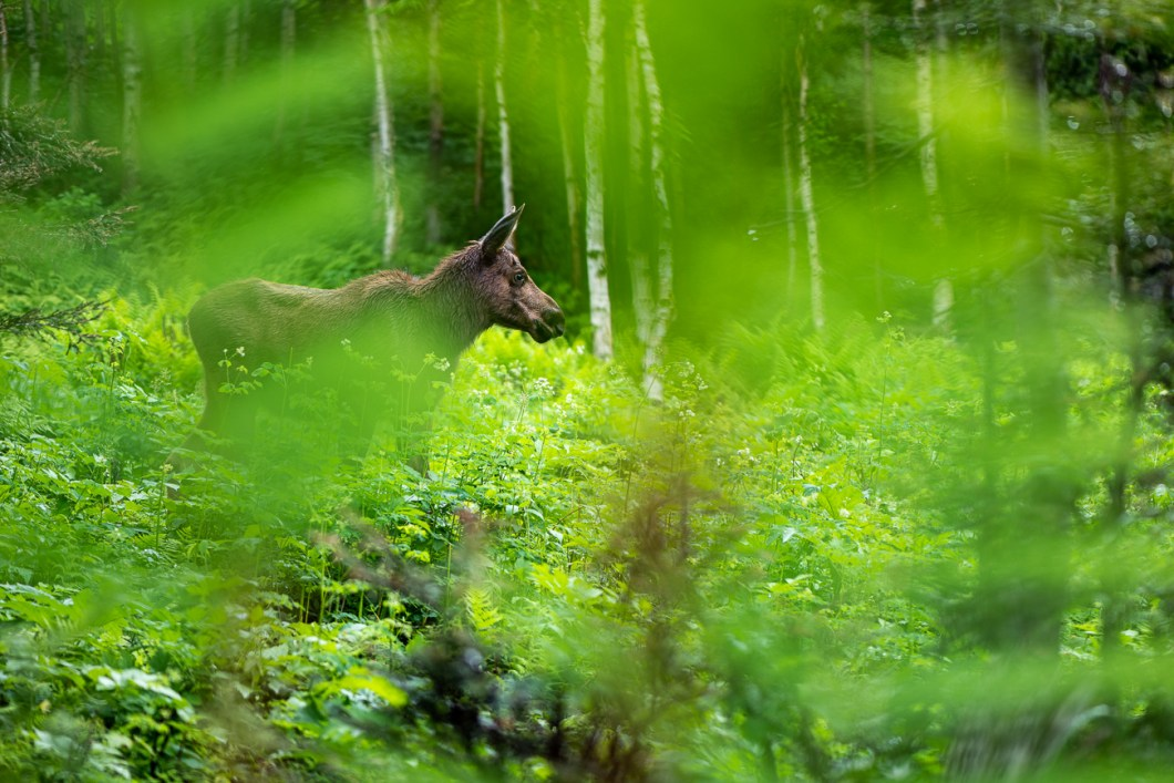orignal parc national gaspésie canada