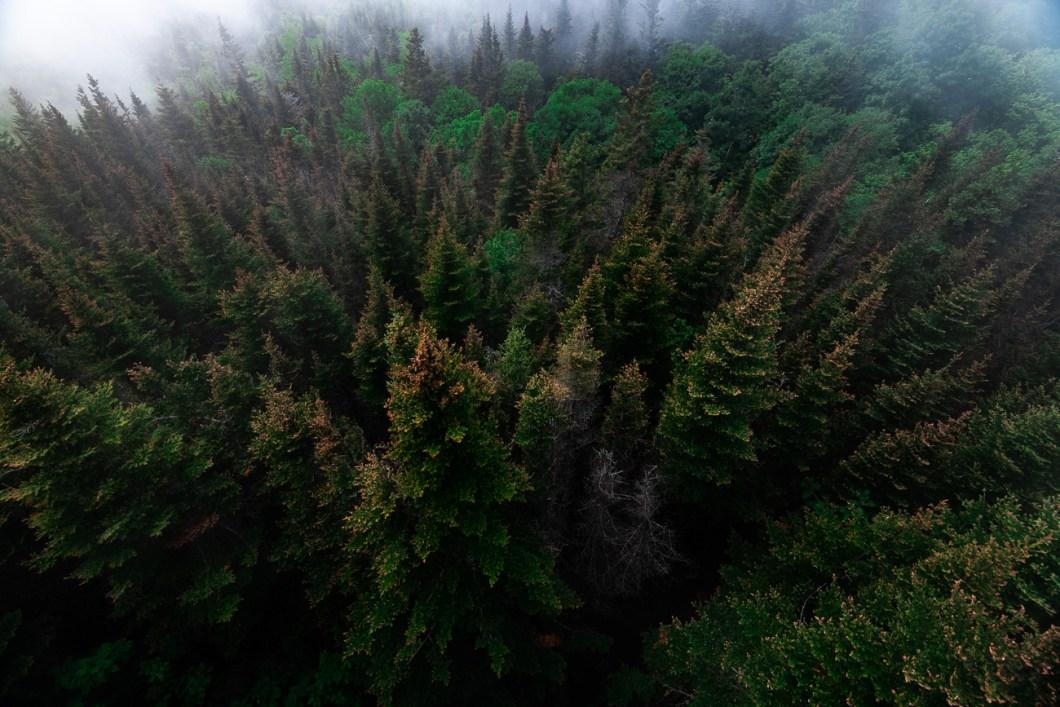 forêt gaspésie parc forillon
