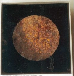 tn_scan004-jpg-mond