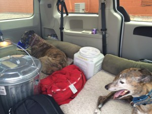 Chillin' in their rented van. This is the life