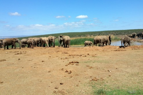 So many elephants