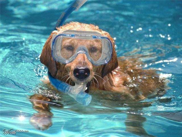 Tại sao bạn không thử học bơi chó?