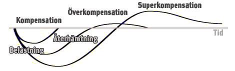 marathon_superkompensation