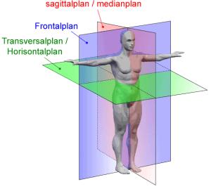De tre anatomiska planen som används för att beskriva rörelser inom anatomin]]-->