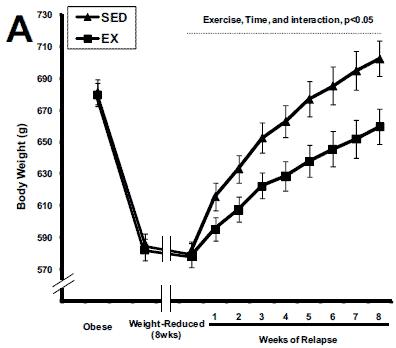 Råttornas viktförändring under studiens gång