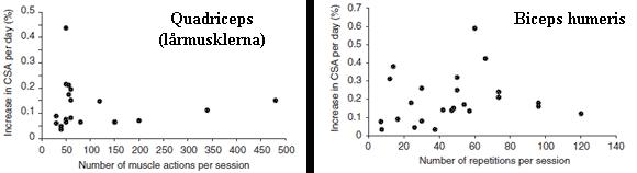 Graferna visar förhållandet mellan antalet repetitioner i ett träningspass och ökning i muskelmassa för två olika muskelgrupper, lårmuskeln till vänster och biceps till höger
