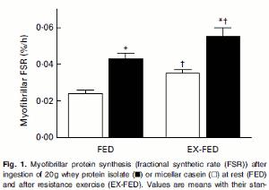 Vassleprotein gav större höjning av proteinsyntesen än kasein