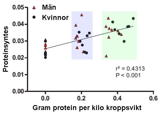 Proteinsyntesen efter olika stora doser av vassle