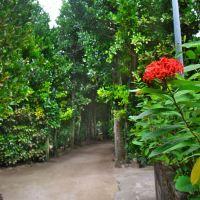 「備瀬のフクギ並木」と「備瀬崎」~海洋博公園に行ったら、ここにも是非立ち寄って見るべき!!