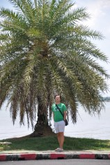 Its a palm tree