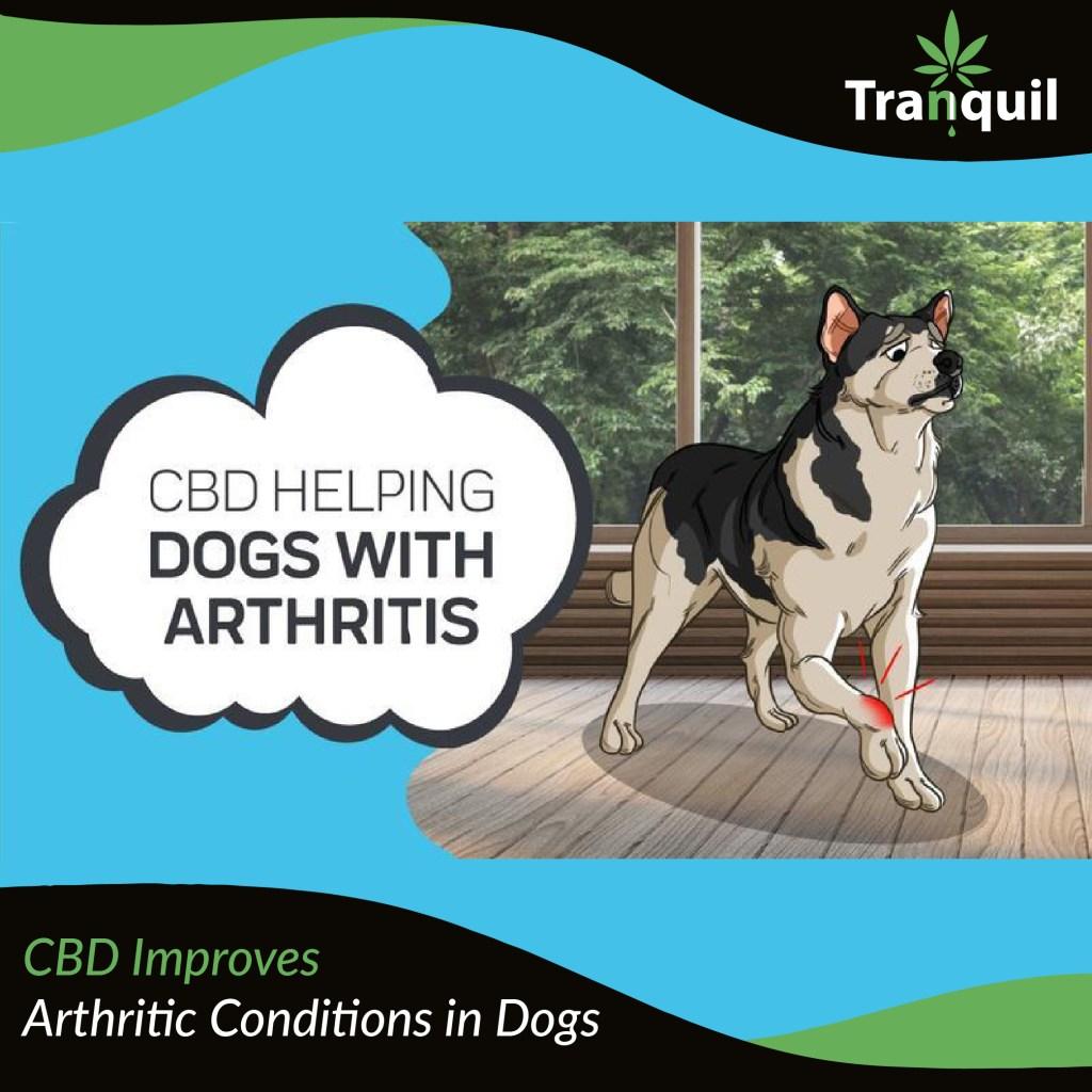 CBD Improves Arthritic Conditions in Dogs