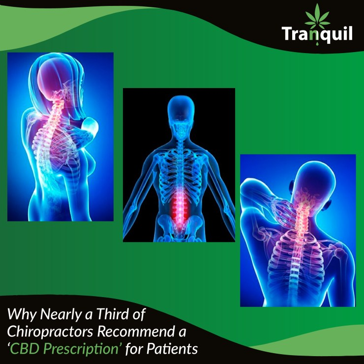 Why Nearly a Third of Chiropractors Recommend a CBD Prescription for Patients