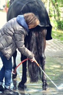 Volker Eubel Horses (22)