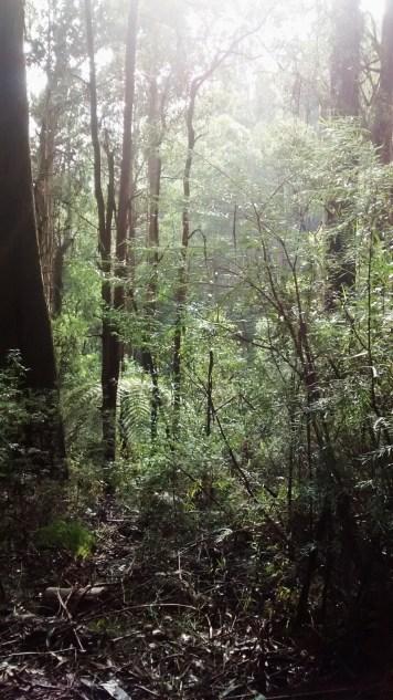 Toolangi State Park 5
