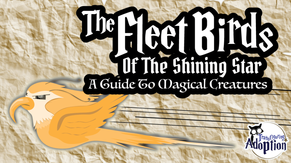 fleet-birds-shining-star-magical-creatures-rectangle