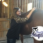 transfiguring-adoption-horse-grooming