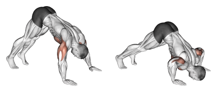 pike pushup pour renforcer les épaules