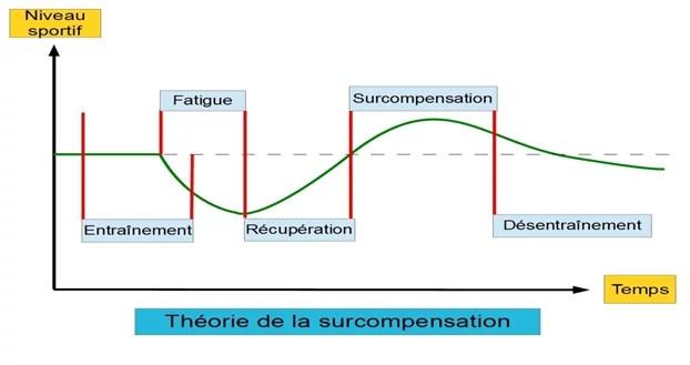 théorie de la surcompensation suite à un entraînement de musculation
