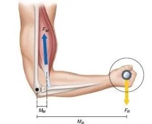 Bras de Levier et curl biceps