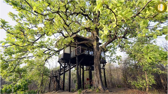 Stay in a Treehouse