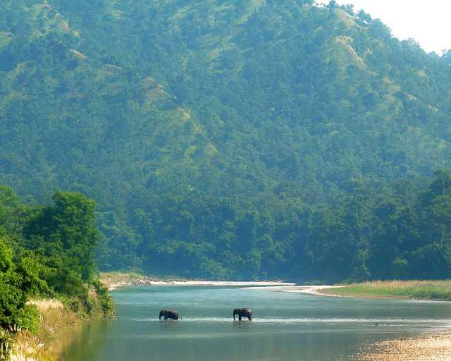 Elephants crossing the Babai in Bardiya