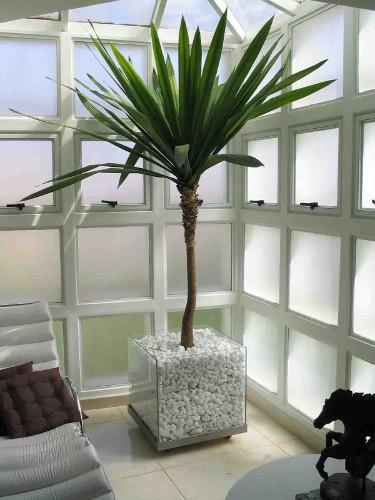 Decoração com plantas naturais – Dicas de profissional (3) dicas de decoração fotos