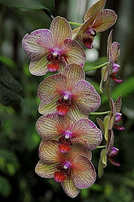 cuidar-de-orquideas-06