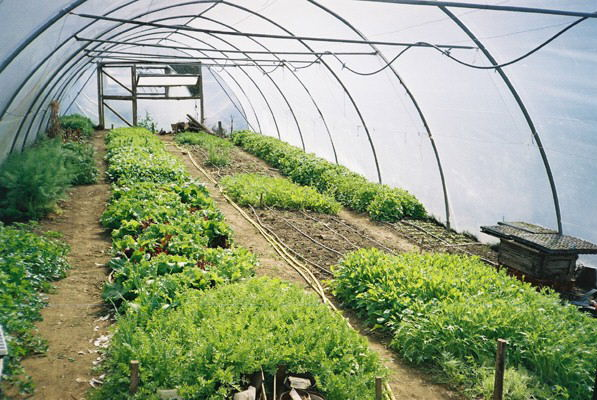 Efficient, proactive weed control is paramount when using solely hand tools for commercial vegetable production.