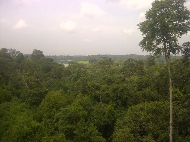 View from the top of the HSBC Treetop Walk