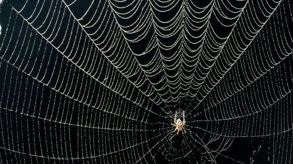The story of the spider's web