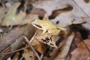 Herpetology Walk in Glen Providence Park @ Glen Providence Park | Media | Pennsylvania | United States