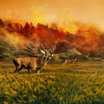 buck and doe running away from raging forest fire