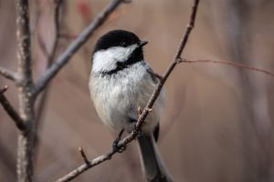 Protecting Biodiversity With Native Plants @ Online