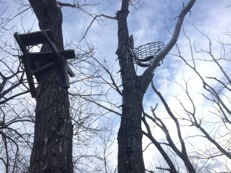 Lone Wolf Treestand